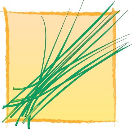 ciboul-illust
