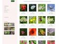 Unitaires-–-Les-élixirs-floraux-de-Flora